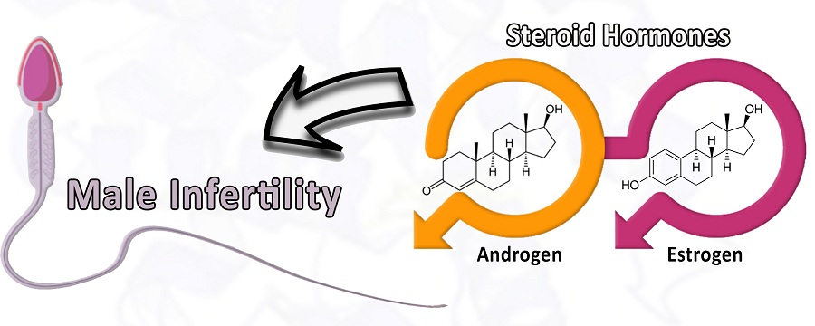 The crucial role of estrogen/androgen hormones and their receptors in male infertility risk