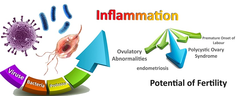 The association of inflammation with reproductive system disorders of women